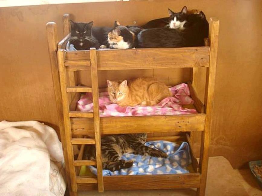 Как сделать кровать для котенка